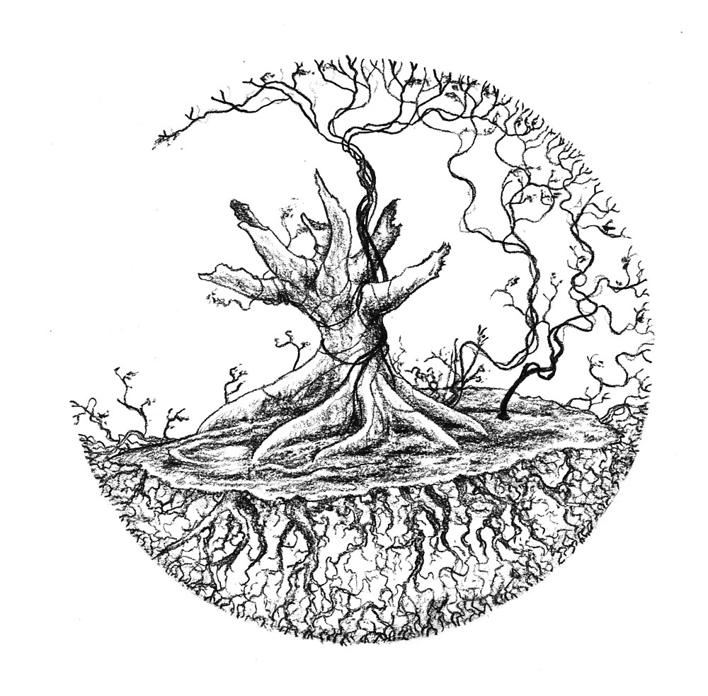 Ficus in Orb by Lewis Smart