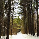 A Walk in the Winter Woods  by lorilee