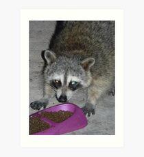 Lámina artística Dangerous Looking Raccoon