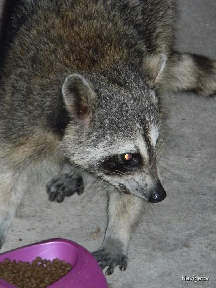 Catfood Burglar Caught RED-HANDED! by Navigator