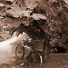 Bicycle by Samantha Jones