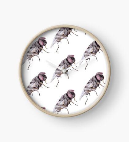 Housefly Clock