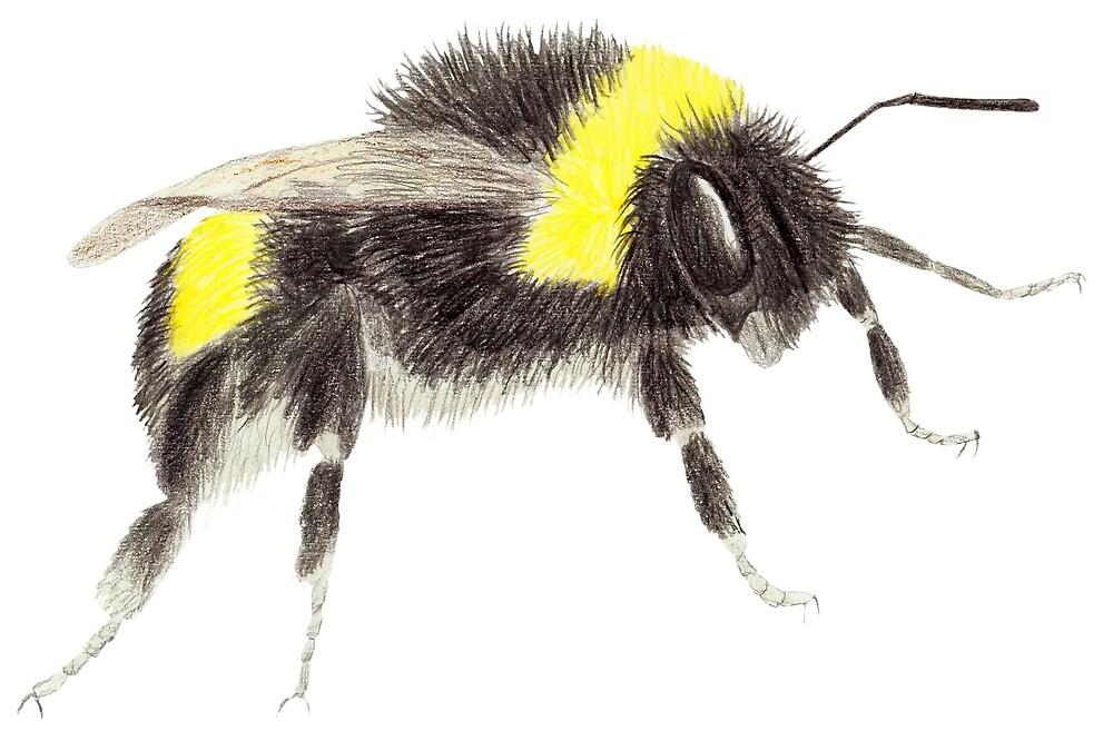 Bumblebee by Linda Ursin