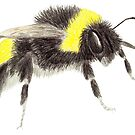 Bumblebee by Linda Ursin