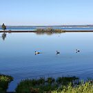 Geese on Yellowstone Lake, Yellowstone NP by Teresa Zieba