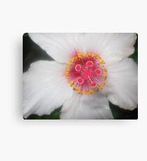 macro flower in wahroonga Canvas Print