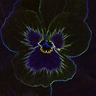 Neon Pansy by Chappy