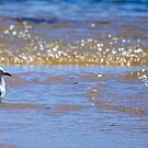 Seagull Dreaming by Penny Smith