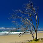 Lone tree at Minnie Water by Penny Smith