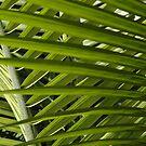 Palm Sunday by christiane