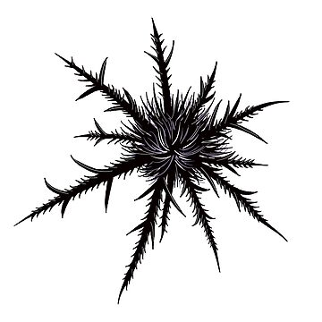 Dry Thistle With Sharp Thorns Botanical Art by azzza