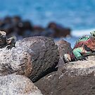 Iguanas in Contrast by Richard Shakenovsky