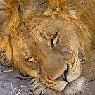 Just a quick nap... by Konstantinos Arvanitopoulos