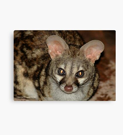 THE LARGE  SPOTTED GENET - Genetta tigrina Canvas Print
