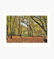 Leafy Glade Art Print