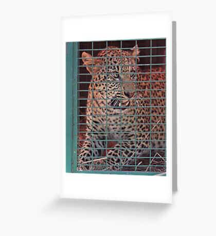 THE LEOPARED THAT WAS CAPTURED IN THE 'TRAP' Greeting Card