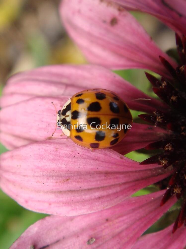 Ladybird, Ladybird, Fly Away Home. by Sandra Cockayne