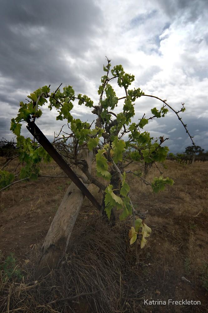 Old vine  by Katrina Freckleton