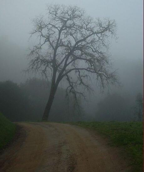 misty tree by phillip wise