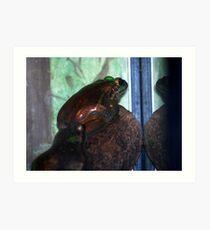 Snobby Frogs. Art Print