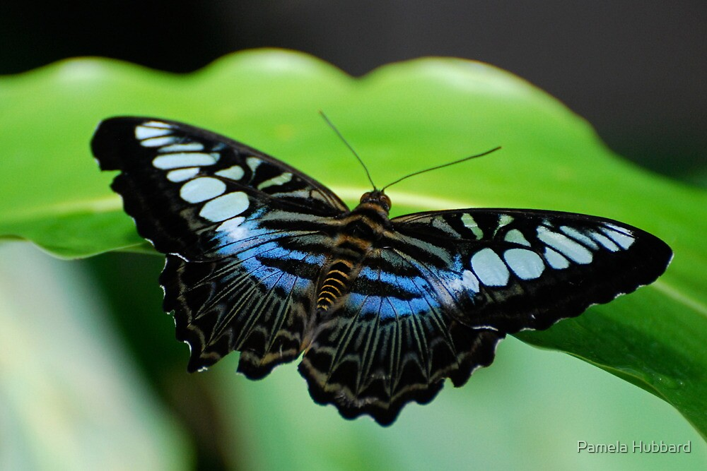 Touch of Blue by Pamela Hubbard