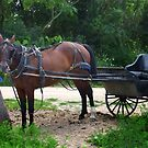 Awaiting Chariot by Patrick Czaplewski