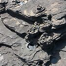 Galapagos Islands: Lava Formation by tpfmiller