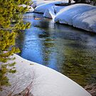 Pool in the Snow by Barbara  Brown