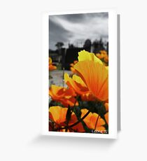 Cooma Cemetery Greeting Card