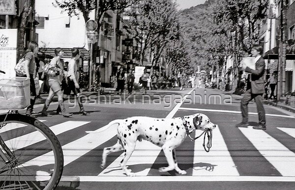 Crosswalk dog  ,   Kobe     JAPAN by yoshiaki nagashima