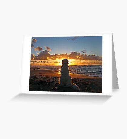 My Golden Retriever enjoys a beautiful sunset Greeting Card