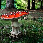 I Love Red Amanita Muscaria by Charles & Patricia   Harkins ~ Picture Oregon
