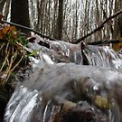 Detail of Creek in March by greycat