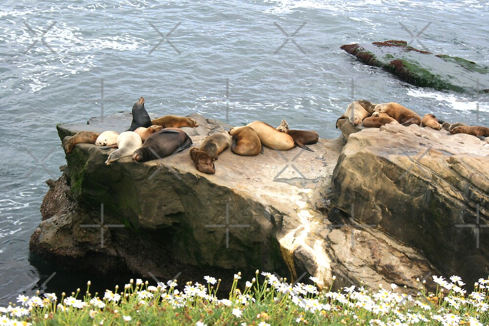 Seals in the Sunshine by Heather Friedman
