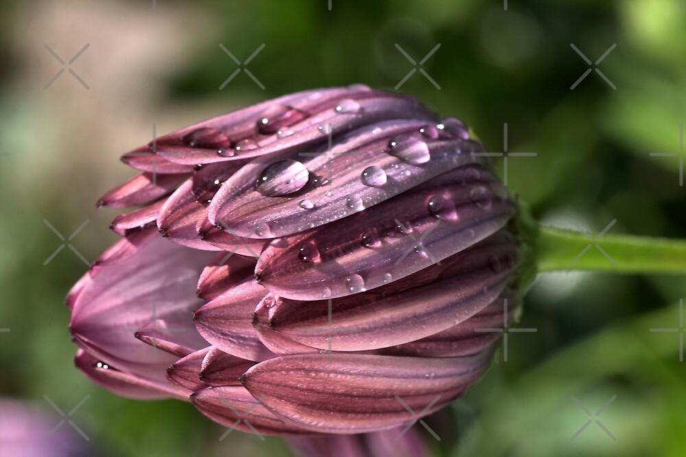 Drops of Dew by Joy Watson
