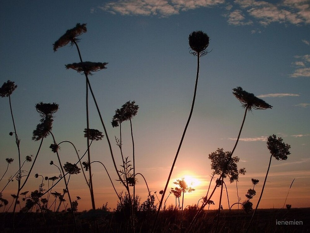 Summer evening by ienemien