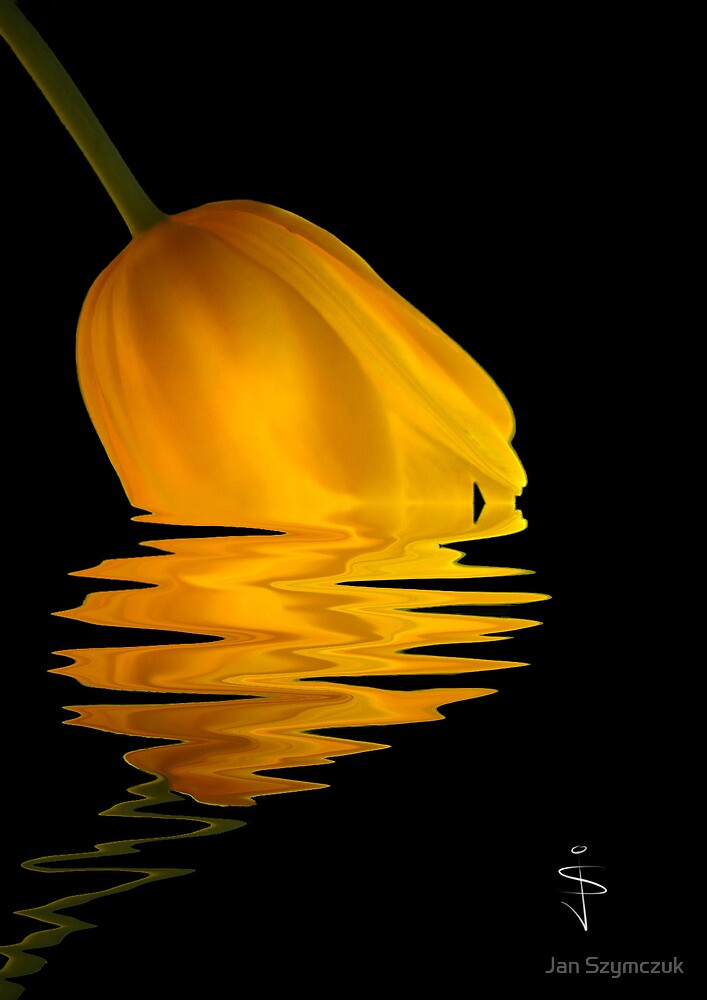 Tulip - Dipping Reflection Series by Jan Szymczuk