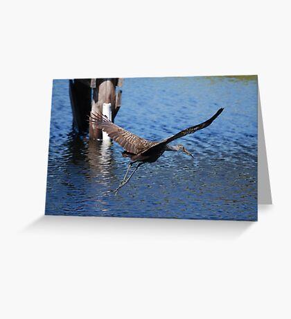 Soaring Limpkin  Greeting Card