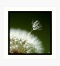 Flowers Squared - Seedling Art Print