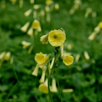 Spring Sour Grass by LyndaAnneArt