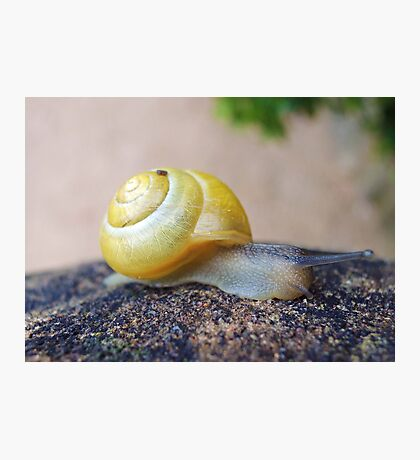 Yellow Snails Bring Joy  Photographic Print