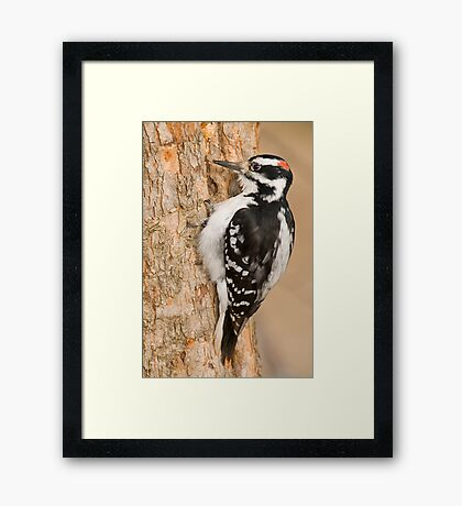 One peck at a Time Framed Print