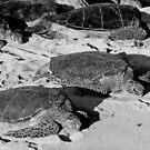 Ho Okipa Beach Park Pair  by Robert Meyers-Lussier