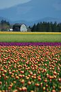 Color In The Countryside. by Todd Rollins