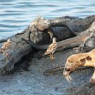 Galapagos Islands: Sharing the Eco Bubble by tpfmiller