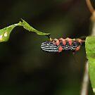 Bolivian Rainforest: Caterpillar by tpfmiller