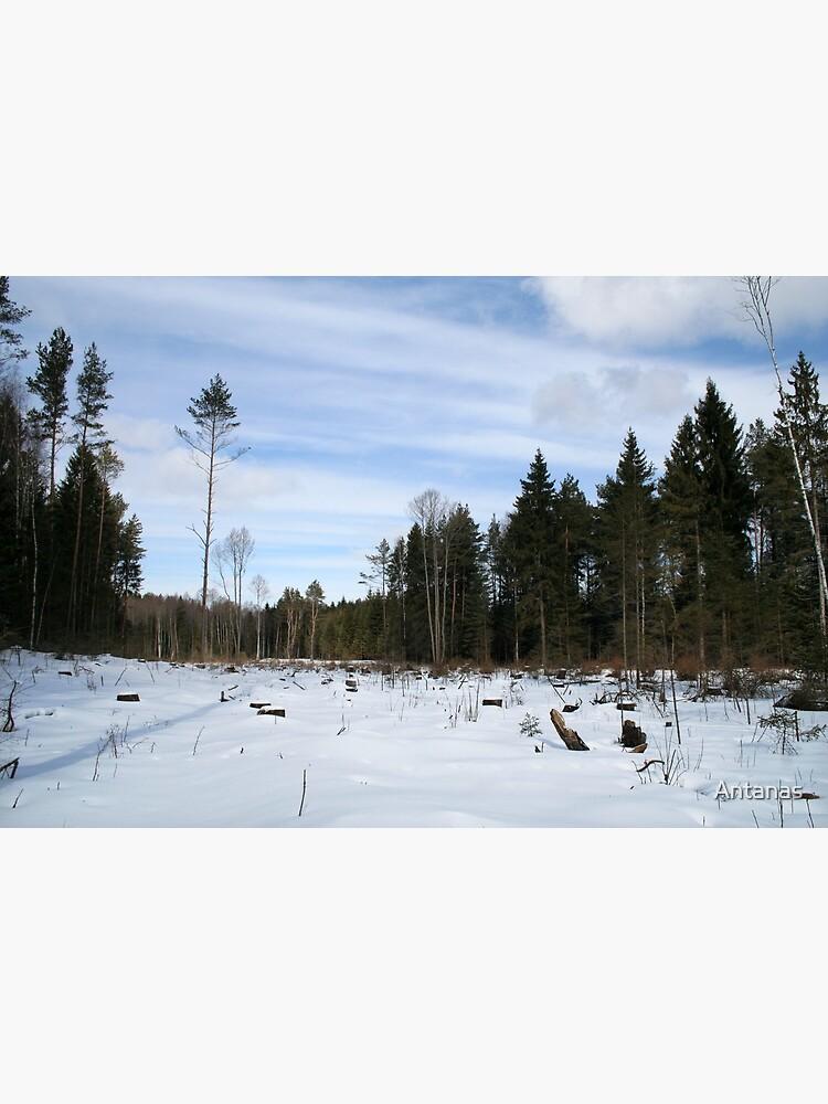 Winter scene by Antanas