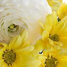 Yellow on White by Ann Garrett