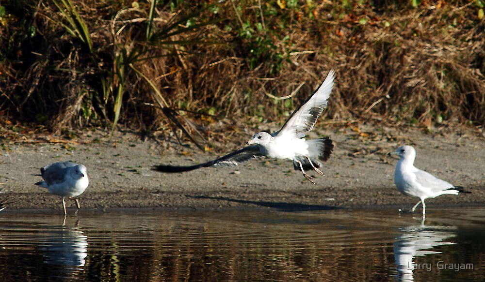 Landing by Larry  Grayam