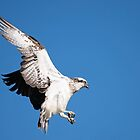 Wings In Motion by JA-Photography